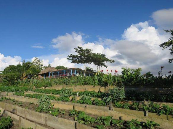 獲得古巴政府提供的土地建立的有機農場。